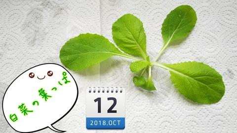 18-10-14-15-23-01-667_deco