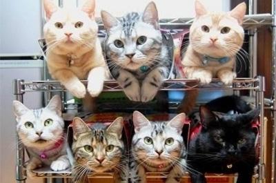 大阪 風俗 求人 シミブロ 猫好き ブログ