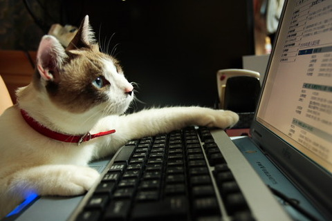 ネコでも簡単にできるパソコン業務