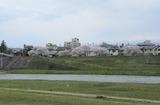 2010sakura0023