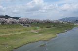 2010sakura0046