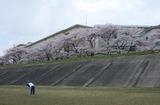 2010sakura0026