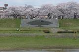 2010sakura0042