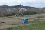 2010sakura0057