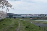 2010sakura0024