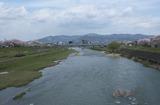 2010sakura0045