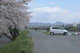 2010sakura0055