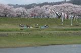 2010sakura0041