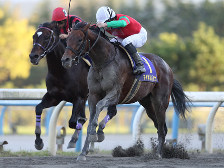 【競馬】柴田大知、マイネル関係以外の馬も集まりだす