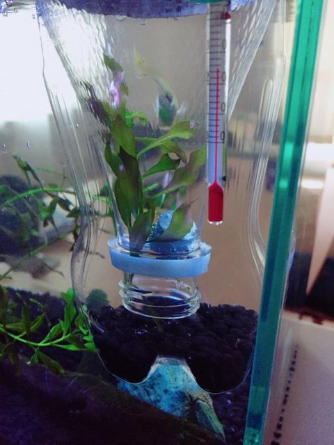 【熱帯魚】グッピーの産卵箱をペットボトルで自作してみた