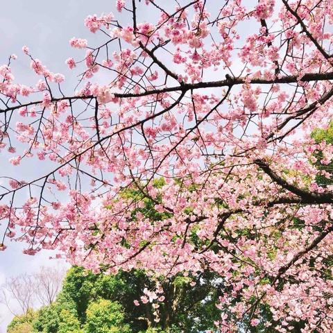 桜が咲き始めた上野へ、ブリューゲル 展