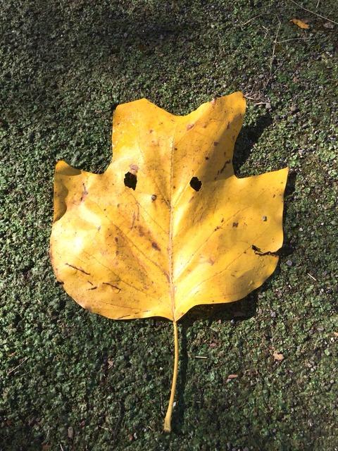 【2歳0ヶ月】散歩の秋、読書の秋、コストコで疲弊の秋