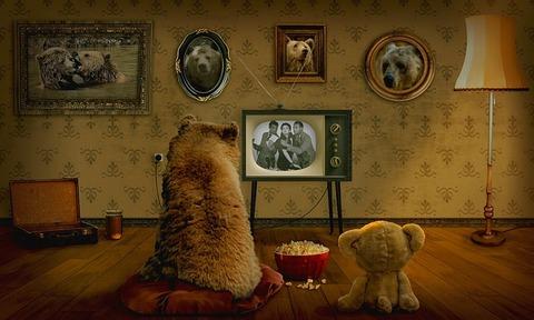 bear-3145874_640 (1)