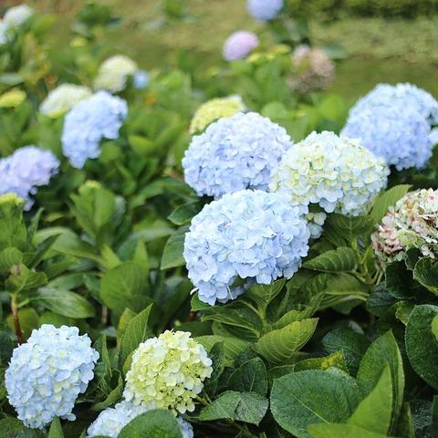 flower-2095435_640