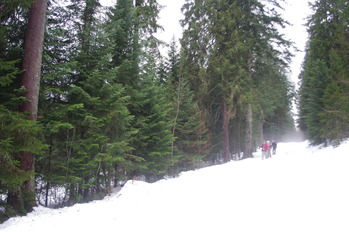 シュバルツバルトの森