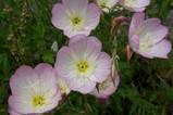 現場のお花