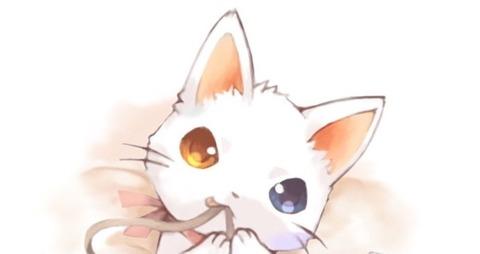 3猫 (3)