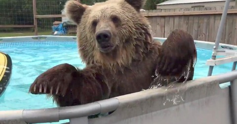 Bruiser-Bear-2