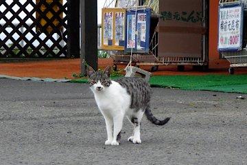 納沙布の猫