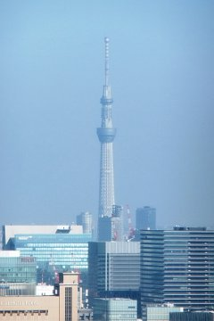 東京タワーからのスカイツリー