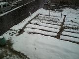 自宅からの雪の状況