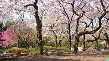 石神井公園 3