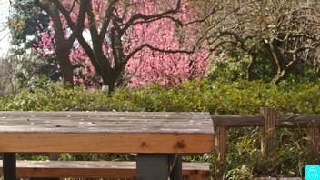 石神井公園 4