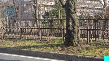 小金井橋 1
