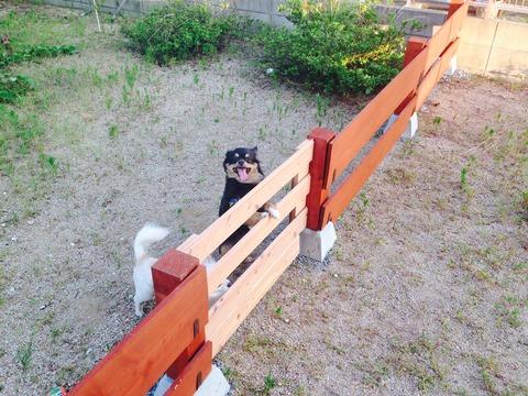 自作の犬用柵