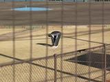 多田野さんの柔軟体操