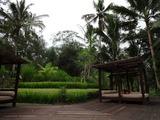 2013年12月バリ島  244