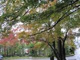 2013年11月箱根仙石原温泉 062