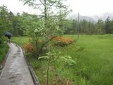 2013年6月上高地・飛騨高山 125