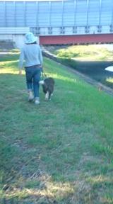 sonic walk