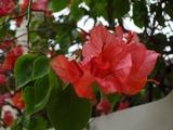 2013年12月バリ島  038