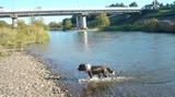 sonic 川