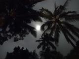 2013年12月バリ島  342