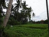 2013年12月バリ島  398