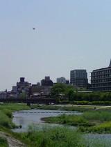 鴨川遊歩道(南方面)