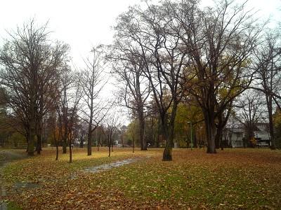 落ち葉の絨毯@常盤公園