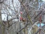 乃木希典生家の庭先にある梅