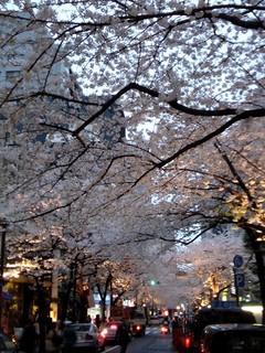 日本橋さくら通りの桜は満開
