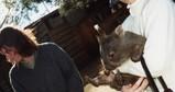Baby Wombat at Wild Life Park in Tasmania