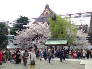 浅草神社から見た外装工事中の浅草寺