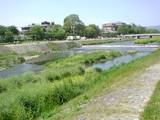 鴨川遊歩道(北方向)