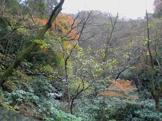 箱根国道1号線沿いの紅葉風景