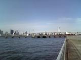 潮風公園から見たレインボーブリッジ