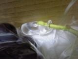 水のカプセル付きブドウ