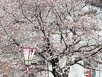 桜1660