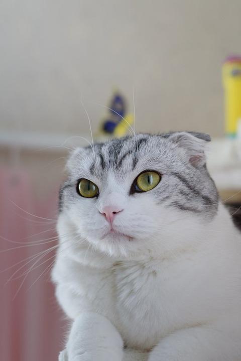 猫 画像 壁紙 待ち受け その24 30枚 18枚目